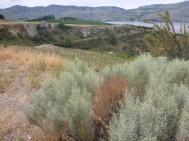 Chelan Vista
