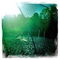 Evening Beach Volleyball