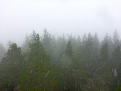 Snow Atop Mount Constitution