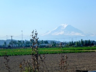Mount Rainier looms in the distance.