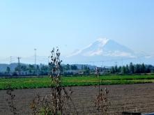 Mount Rainier looms in the distance.