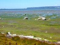 Birch Bay