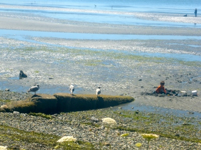 Child playing in mud as gulls observe