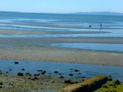 Walking the dog, Birch Bay