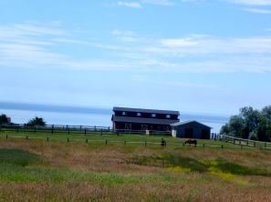 Whidbey Horses