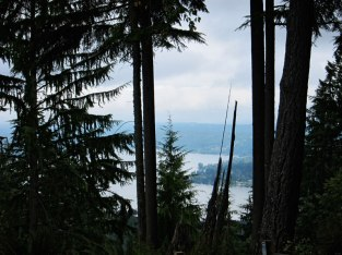 Lake Washington seen through the trees.