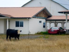 A one-cow garage