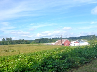 Many beautiful farms.