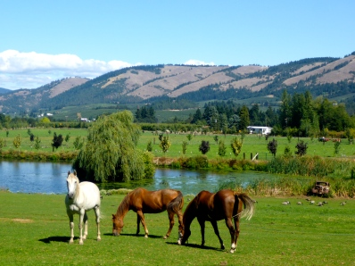 Horses, ducks, old cars and vistas.